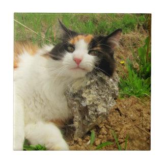 Puma's Hard Pillow Calico Kitty Tile