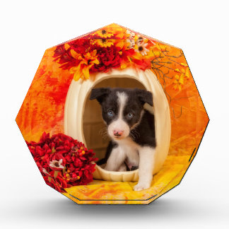 Pumkin Puppy Award