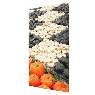 Pumpkin and squash pattern, Germany Canvas Print