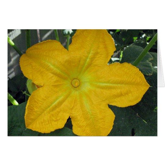 Pumpkin Blossom Card