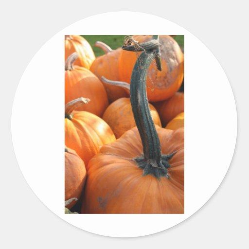 Pumpkin close-up classic round sticker