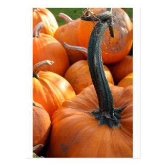 Pumpkin close-up post cards