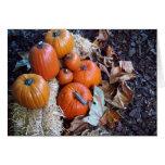 Pumpkin display greeting card