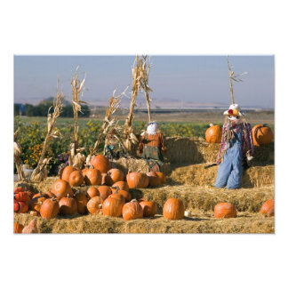 Pumpkin display with hay bales and scarecrows photo print