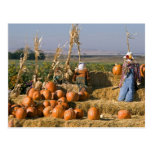 Pumpkin display with hay bales and scarecrows postcard