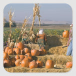 Pumpkin display with hay bales and scarecrows square sticker