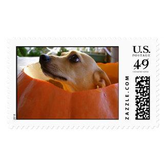 pumpkin dog stamp