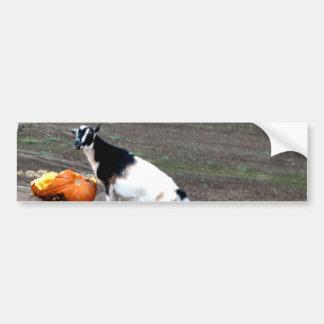 Pumpkin Eater Car Bumper Sticker