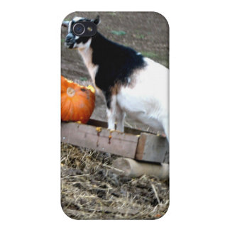 Pumpkin Eater Covers For iPhone 4