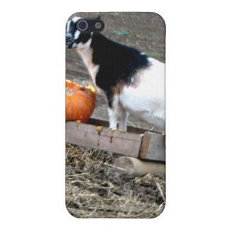 Pumpkin Eater iPhone SE/5/5s Cover