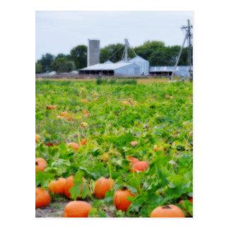 Pumpkin Farm Postcard