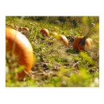 Pumpkin Feilds Post Card