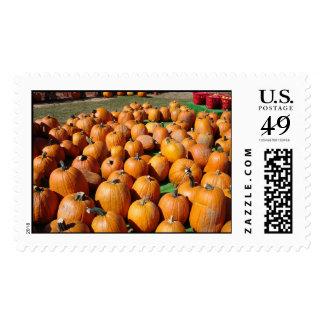 Pumpkin Field Postage