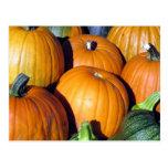 Pumpkin Harvest Postcards