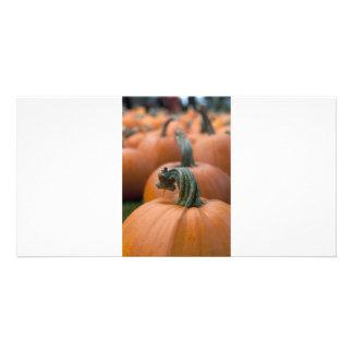 Pumpkin in Field Card