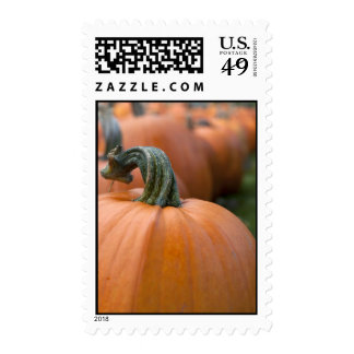 Pumpkin in Field Postage Stamps
