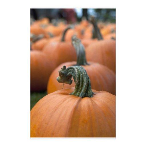 Pumpkin in Field Stationery Design