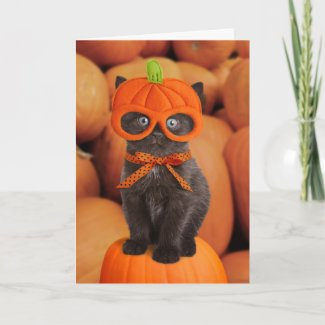Pumpkin Kitten Halloween Card card
