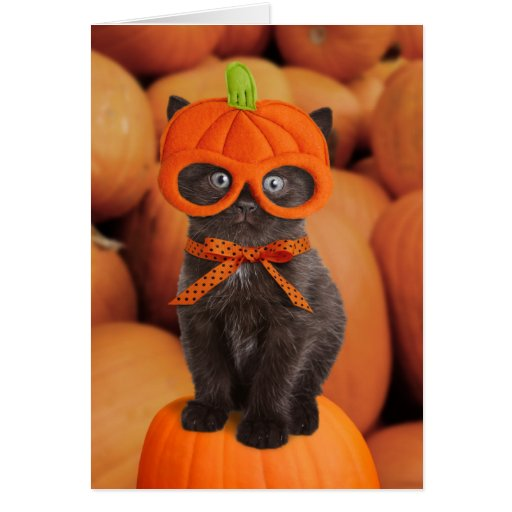pumpkin kitten halloween card zazzle. Black Bedroom Furniture Sets. Home Design Ideas