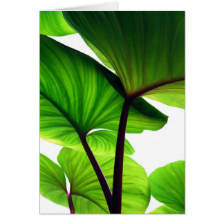 Pumpkin Leaves Floral Photo Card