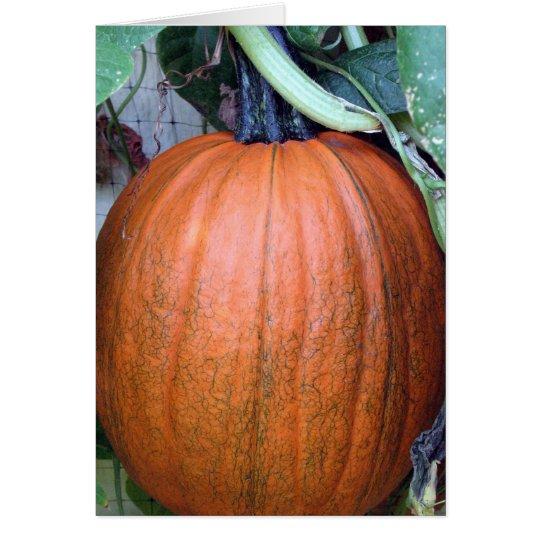Pumpkin on a Trellis Card