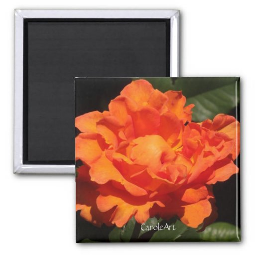 Pumpkin Orange Rose Magnet