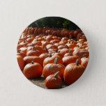 Pumpkin Patch Autumn Harvest Photography Button