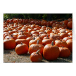 Pumpkin Patch Autumn Harvest Photography Card