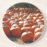 Pumpkin Patch Autumn Harvest Photography Drink Coaster