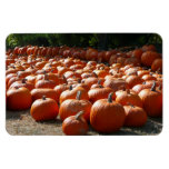Pumpkin Patch Autumn Harvest Photography Magnet