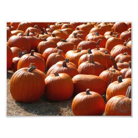 Pumpkin Patch Autumn Harvest Photography Photo Print