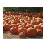 Pumpkin Patch Autumn Harvest Photography Wood Wall Art