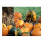 Pumpkin Patch By A Tree Postcards