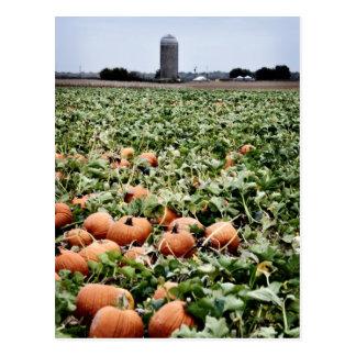 Pumpkin Patch in Lawrence, KS Postcard