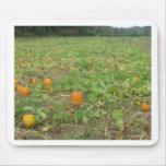 Pumpkin patch mouse pads