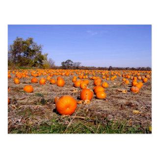 Pumpkin Patch-postcard
