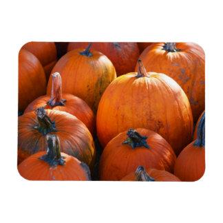 Pumpkin Patch Rectangular Magnets