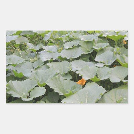 Pumpkin patch rectangular sticker