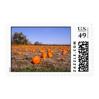 Pumpkin Patch- stamps