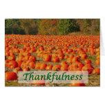 Pumpkin Patch - Thankfulness Cards
