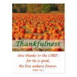 Pumpkin Patch - Thankfulness Post Cards