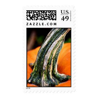 Pumpkin Stem Postage Stamps