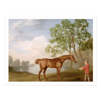 Pumpkin with a Stable-Lad, 1774 (oil on panel) Postcard