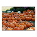 Pumpkins and Mums Autumn Harvest Photography Card