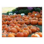 Pumpkins and Mums Autumn Harvest Photography Photo Print