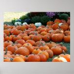Pumpkins and Mums Autumn Harvest Photography Poster