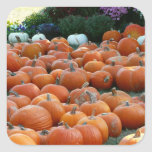 Pumpkins and Mums Autumn Harvest Photography Square Sticker