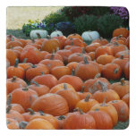 Pumpkins and Mums Autumn Harvest Photography Trivet