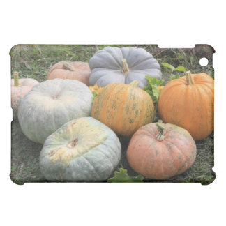 Pumpkins and Squashes Cover For The iPad Mini
