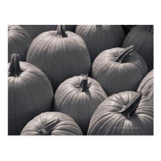 Pumpkins at a local farmer's market postcard